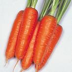 野菜たね 種 ニンジン 大型五寸人参 1袋(10ml) / 人参 キャロット 野菜の種 国華園