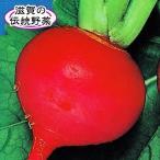 野菜種 野菜たね 蕪 カブ かぶ 国華園 たね