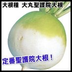野菜たね 種 ダイコン 大丸聖護院大根 1袋(10ml) /