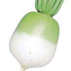野菜たね 種 ダイコン 中長聖護院大根 1袋(10ml) / 大根 大根の種 ダイコンの種 丸大根 丸だいこん 京野菜 京都の伝統野菜 煮物向き しょうごいん 国華園
