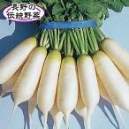 野菜たね ダイコン 信州地大根 1袋(10ml入)