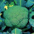 種 野菜たね ブロッコリー F1どっさり緑 1袋(0.5ml入)/タネ たね ぶろっこりー
