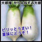 種 野菜たね ダイコン からみねずみ大根 1袋(3ml入)