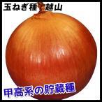 野菜たね 種 タマネギ 越山 1袋(3ml) / 玉葱 玉葱の種 タマネギの種 玉ねぎの種 種子 中晩生 野菜の種 国華園