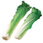 種 野菜たね ハクサイ タケノコ白菜 1袋(5ml入)/タネ たね 白菜 はくさい