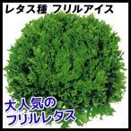 野菜たね レタス フリルアイス 1袋(コート種子100粒入)