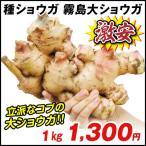 種ショウガ 国産霧島大ショウガ 1kg