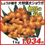 種ショウガ 大特価大ショウガ 1kg / 生姜 しょうが たね芋