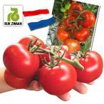 野菜たね トマト F1エンデバーRZ 1袋(10粒) / 種 タネ