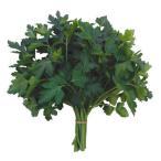 野菜種野菜タネハーブ
