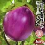 野菜たね ナス ロッサビアンコ 1袋(1ml)