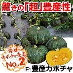 野菜たね カボチャ F1豊産かぼちゃ 1袋(10粒) / 種 タネ