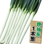 野菜たね ネギ 晩抽美肌一本葱 1袋(10ml)