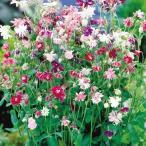 花たね 多年草 西洋おだまき八重咲混合 1袋(100粒)