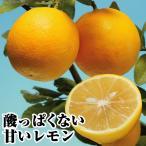 果樹苗 カンキツ スイートレモネード 1株