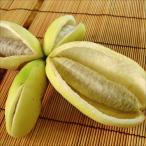 果樹苗 アケビ バナナアケビ 1株