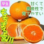 果樹苗 カンキツ もちまる宮川 1株