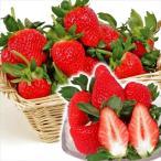 いちご苗 女峰 10株 / 苺 イチゴ いちごの苗 苺の苗 ストロベリー 家庭菜園 鉢 プランター 国華園