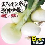 種 野菜たね タマネギ スイートグローブ 1袋(5ml入)