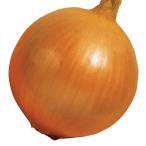 種 野菜たね タマネギ 甘早果 1袋(5ml入)/タネ たね たまねぎ 玉ねぎ 玉葱 玉ネギ