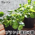 【苗】【山菜】
