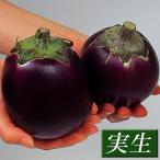 実生野菜苗 大丸ナス 賀茂ナス 4株
