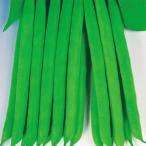 野菜たね インゲン 早生つるなしインゲン 1袋(30ml)
