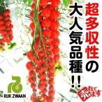 野菜たね トマト F1ダルタリーRZ 1袋(10粒) / 種 タネ