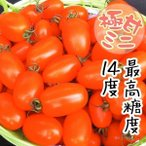 野菜たね トマト F1ゴールデンスイート 1袋(12粒) / 種 タネ