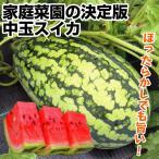 野菜たね スイカ F1コロ助 1袋(10粒)