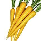 種 野菜たね ニンジン F1スマートイエロー 1袋(ペレット種子100粒) / 野菜のタネ 野菜 種子 にんじん 人参 【YTC26】 国華園