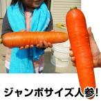 野菜たね ニンジン F1おおきな人参 1袋(100粒)