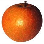 果樹苗 ナシ 大天梨R(ささき1号P) 1株 / 果物苗 フルーツ苗 梨 なし