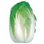野菜たね 種 ハクサイ 京都三号白菜 1袋(5ml) / 白菜 野菜の種 国華園