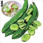 種 野菜たね マメ 一寸そら豆 1袋(25ml入)/タネ たね まめ 豆 空豆 ソラマメ ソラ豆