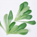 種 野菜たね 健康野菜 マーシュ(コーンサラダ) 1袋(5ml入)