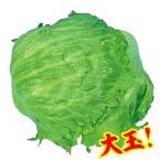 野菜たね 種 レタス グレートレーク 1袋(3ml) / チシャ 野菜の種 国華園