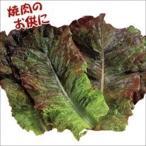 野菜たね 種 レタス 赤焼肉レタス 1袋(3ml) / チシャ 野菜の種 国華園