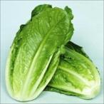 種 野菜たね レタス コスレタス 1袋(5ml入)