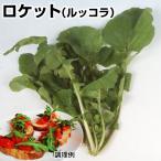 野菜たね ハーブ ロケット(ルッコラ) 1袋(4ml入)