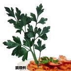種 野菜たね ハーブ イタリアンパセリ 1袋(3ml入)/タネ たね