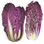 種 野菜たね ハクサイ F1むらさき白菜 1袋(コート種子50粒入)