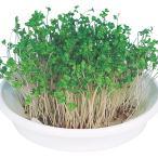 野菜たね ブロッコリー(スプラウト用) 1袋(50ml入)
