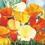 花たね カリフォルニアポピー混合 1袋(500mg)