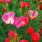 花たね カリフォルニアポピー ピンク 1袋(500mg)