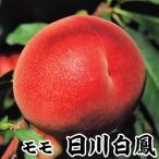 果樹苗 モモ 日川白鳳 1株 / 苗木 桃 もも 甘い 1本で 美味しい ひかわはくほう 国華園
