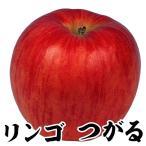 果樹苗 リンゴ つがる 1株