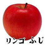 果樹苗 リンゴ ふじ 1株