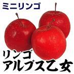 果樹苗 リンゴ アルプス乙女 1株