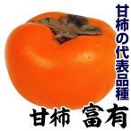 果樹苗 甘柿 富有 1株